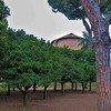 Apse of the Church of Santa Sabina seen from the orange garden (Parco degli Aranci)
