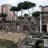 Forum Nerwy