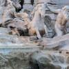 Fontana di Trevi, fragment